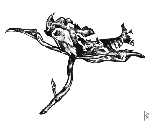 Orchidaceae Illustration