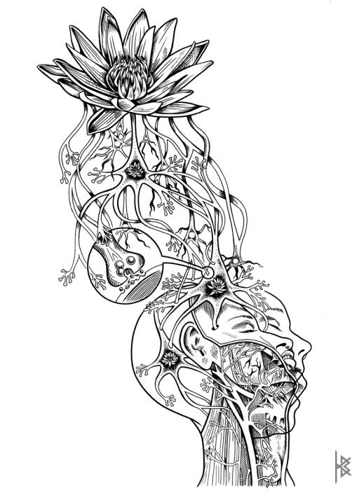 Synaptic Transmission Illustration