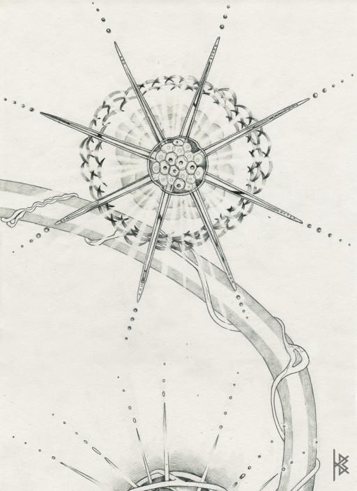 KB. ''Star Divide'' Pencil on Paper, 6'x8'. 2007
