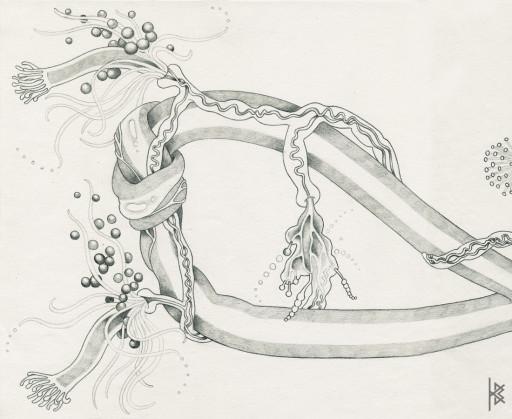 KB. ''Knot'' Pencil on Paper, 6'x8'. 2007